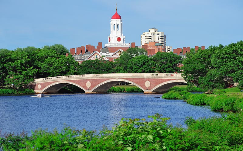 Poisonous Algae Blooms Return to the Charles River