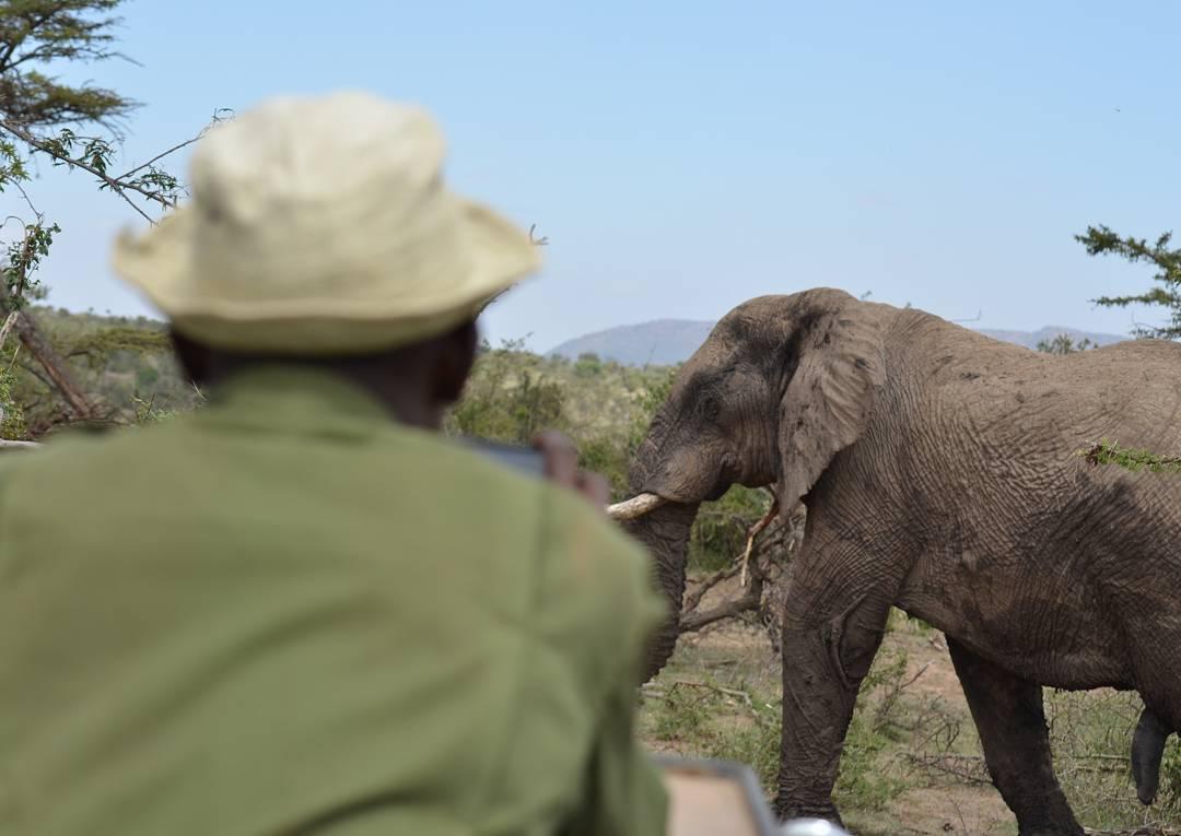 elephant and ranger