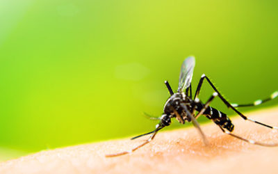 How to Reduce the Risk of Eastern Equine Encephalitis