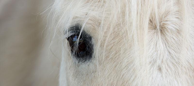 Eastern Equine Encephalitis EEE